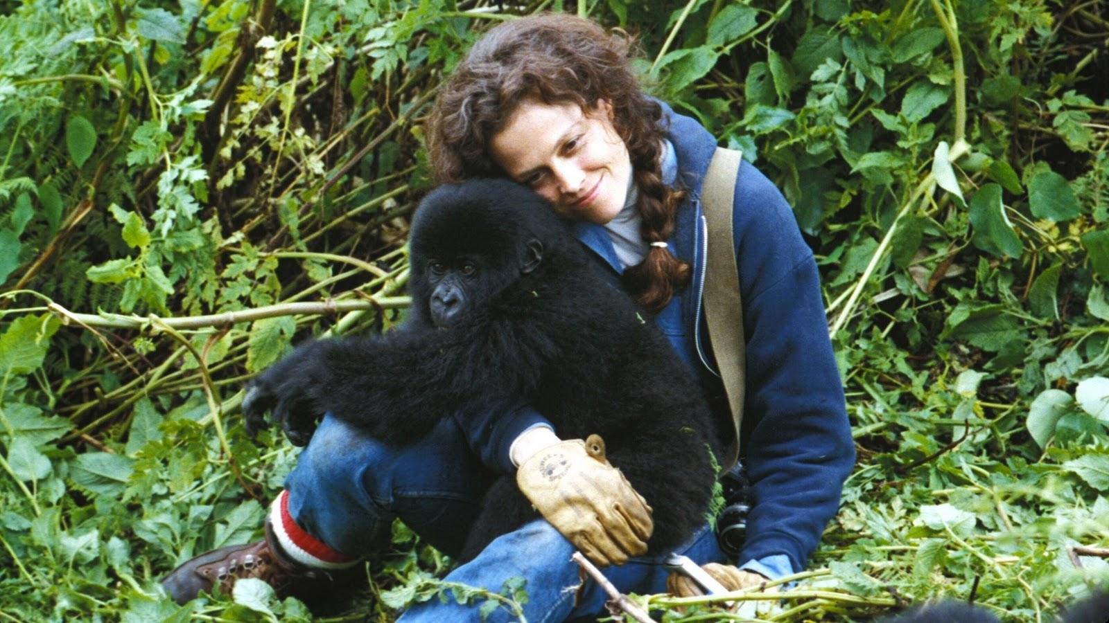 Gorilla en la niebla online dating 1
